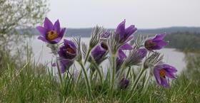Naturreservatet Fjärås Bräcka