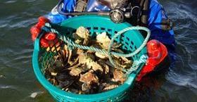 Ostron- & musseläventyr med Strandflickorna i Lysekil