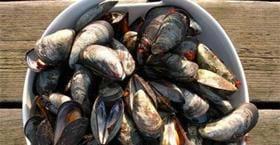 Ostron- och musseläventyr med Gullmarsstrand
