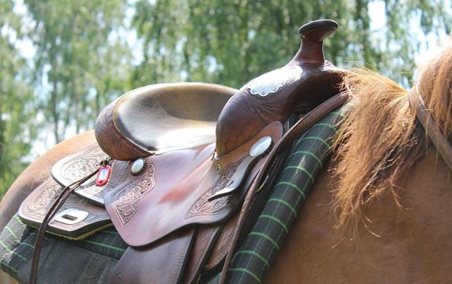 Pin by Pat Noon on Horse Geek   Horses, Animals, Geek stuff