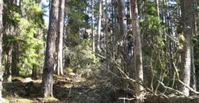 Ullebergsskogens naturreservat