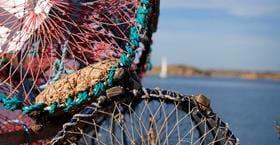 Hummerfiske på Sea Lodge Smögen