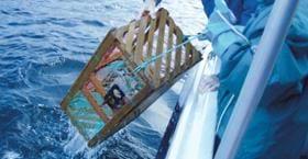 Laholmens hummerfiskepaket