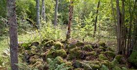 Ekebergs lövskog - naturreservat