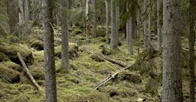 Lysings forest - nature reserve