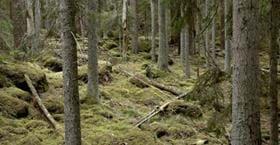 Lysings urskog - naturreservat