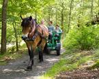 Häst & vagn på Stättared