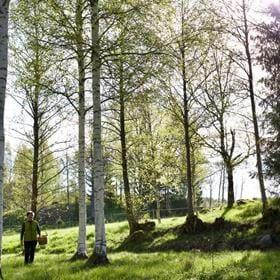 Välkommen till vild växtvandring i engelska parken, Hälleforsnäs!  Nu när naturen vaknar börjar den bästa tiden för att plocka vilda växter. Lena Engelmark Embertsén, skogstokig kemiingenjör och matinnovatör, Högtorp gård, bjuder in dig att följa med ut i hennes smakvärld.