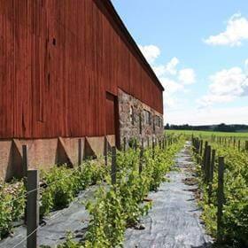 Den 24 April inviger vi det nyrenoverade orangeriet som ligger jämte restaurangen på Blaxsta Vingård.